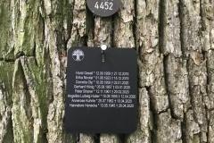 Namenstafel am Baum des Bestattungsplatzes